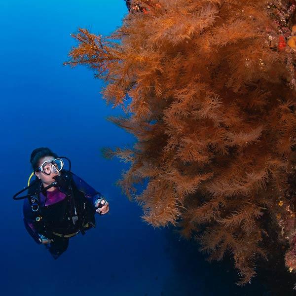 PADI Enriched Air Nitrox Course Speciality Lanzarote | Manta Dive Centre Lanzarote