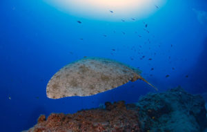 Divemaster Internship Lanzarote Canary Islands