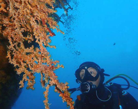 Divemaster Lanzarote | Manta Dive Centre