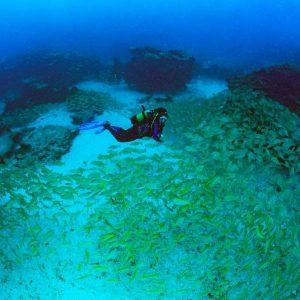 PADI Naturalist Speciality Course | Manta Diving Lanzarote