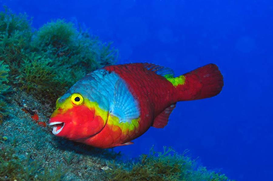 Parrotfish | First Time Scuba diving in Lanzarote | PADI discover scuba diving lanzarote