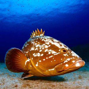 Lanzarote Diving | Manta Dive Centre