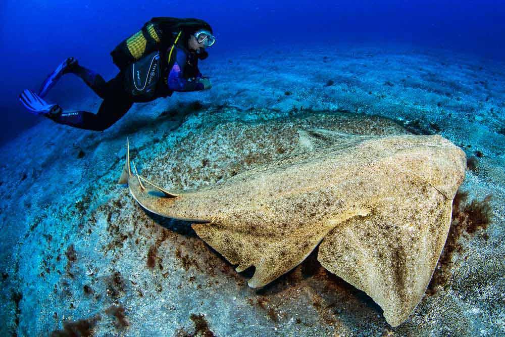 Angel Shark | Diving Puerto Del Carmen Lanzarote | Manta Diving Lanzarote