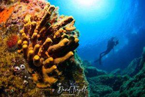 PADI Course Price Lanzarote | Manta Diving Lanzarote