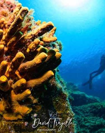 Fun Dives for Certified Divers