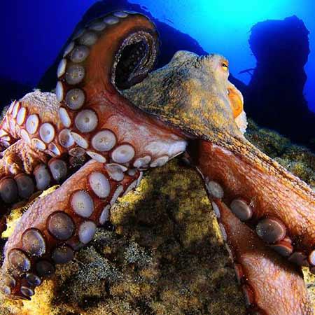 Octopus | Open Water | PADI Dive Centre Lanzarote