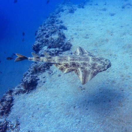 Scuba Course PADI Puerto Del Carmen Lanzarote | Manta Diving Lanzarote
