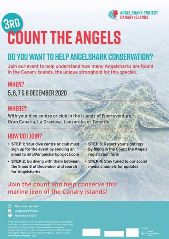 Count the Angel Sharks 2020 | Angel Shark Project