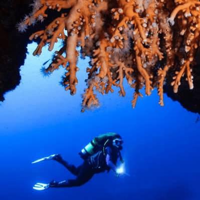 Red Coral | Advanced PADI Lanzarote | Manta Diving Lanzarote