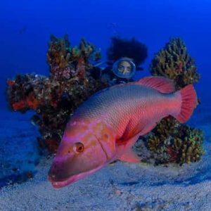 Dive sites in La Graciosa - Dive La Graciosa with Manta Diving Lanzarote