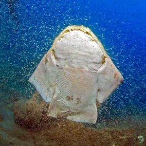 Dive sites in Playa Blanca - Dive Playa Blanca with Manta Diving Lanzarote