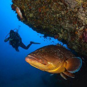 Dive the Orange Coral - one of the shore dives in Puerto Del Carmen, Lanzarote